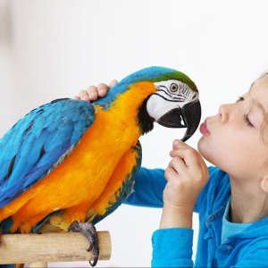 Как проявляется эхолалия у детей и как е устранить