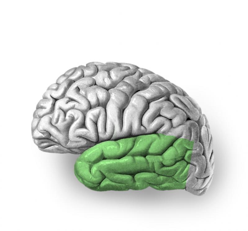 Симптомы и прогноз при височной эпилепсии у детей и взрослых